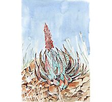 Aloe peglerae - Each Flower is a Soul Photographic Print