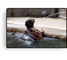 Big Mouth Hippo Canvas Print