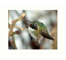 Humming Bird Art Print