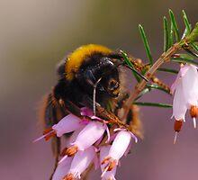 Meet Mr. Bumblebee by Mirka Rueda Rodriguez