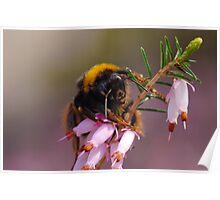 Meet Mr. Bumblebee Poster