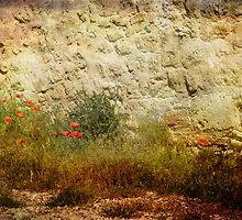 Wild Poppies by Elaine Teague
