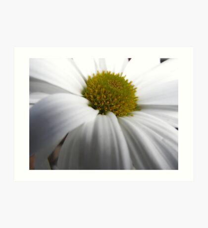 Just another Flower shot. Hmmm Art Print
