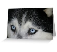 Eyes of the Husky Greeting Card