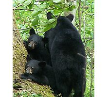 Three Bears Photographic Print