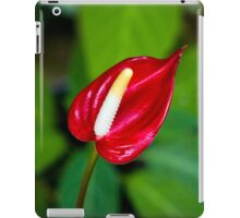 Miniature Deep Red Anthurium Flower  iPad Case/Skin