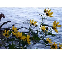 Wild Flowers by Lake Photographic Print