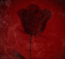 Symbol Of My Love Blooming Red Rose Digitally Enhanced Photograph by Adri Turner