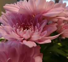 Chrysanthemum by Caroline Smalley