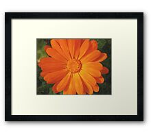Orange Favourite Framed Print