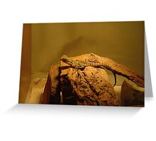 Baby Water Dragon Greeting Card