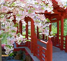 Japanese Cherry by JuliaWright