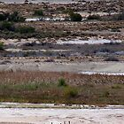 Emu's on the salt pan by Reddirt