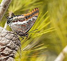 Two-tailed Pasha (Charaxes jasius) by PhotoStock-Isra
