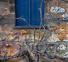 Winery Window by David Creed