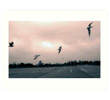 Seagulls on Jones Beach, NY Art Print