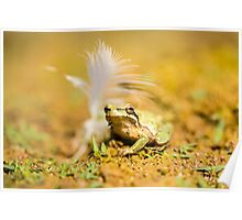 European tree frog (Hyla arborea) near water  Poster