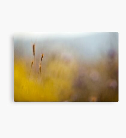 Selective focus on a plant in a wild field  Canvas Print