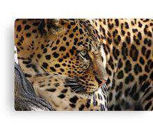 Watching Leopard Canvas Print
