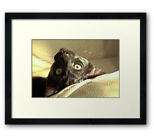 WHICH WAY IS UP? Framed Print