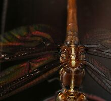 Stained Glass Dragonfly by Michael Reimann