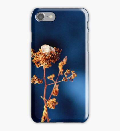Ice Cap  iPhone Case/Skin