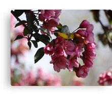 Bloomin' Blossoms Canvas Print