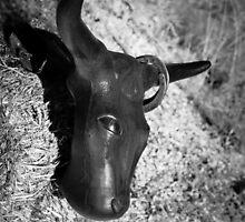 Lookout at the Kannally Ranch - Oracle, AZ by Robert Kelch, M.D.
