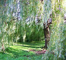 Willow Sanctuary by Freedom