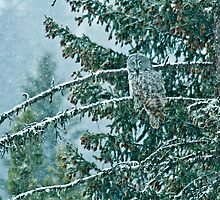 Great Grey Owl in a Snowstorm by LarryGambon