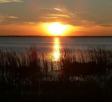 Sunset Through The Water Grass by kevint