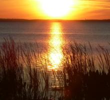 Sunset Through The Water Grass Sticker
