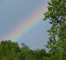 Rainbow Segment by Tammy F