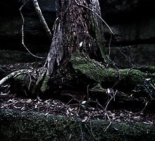The false tree is dead by MagnusAgren