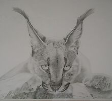 Caracal by Adrian Wells