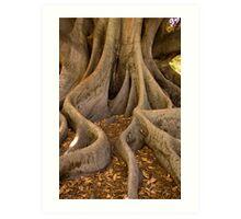 Golden Fig Tree Art Print