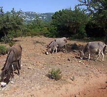Three donkeys by John Quinn