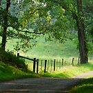 Tranquil Path. by artgoddess