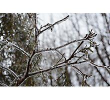 Frozen Season Photographic Print