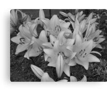 lillys in black & white Canvas Print