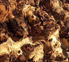 Red River Gum Bark by Blue Gum Pictures