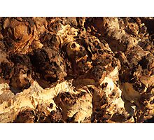Red River Gum Bark Photographic Print