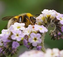 Bee at work by Charles Howarth