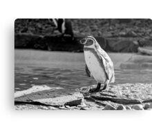 Penguin in Black & White Metal Print