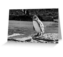 Penguin in Black & White Greeting Card