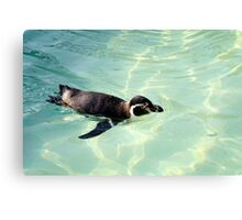 Swimming Penguin Canvas Print