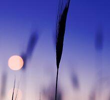 Blade  by John Robb