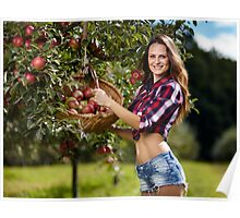 Beautiful woman picking apples Poster