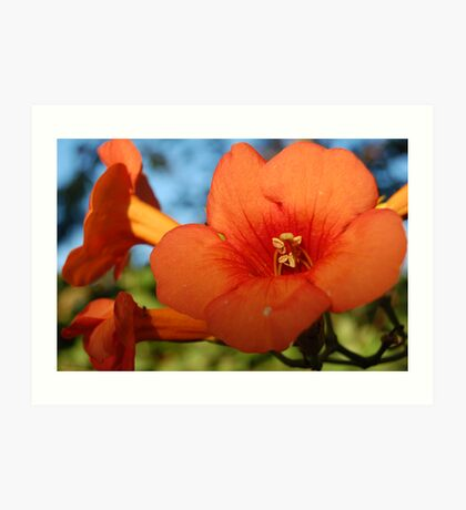 Greek Flower Art Print