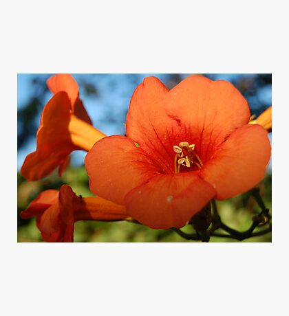 Greek Flower Photographic Print